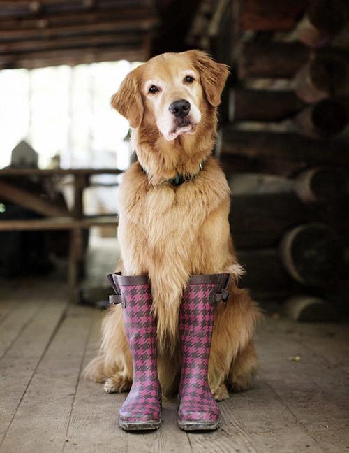 rain boots14