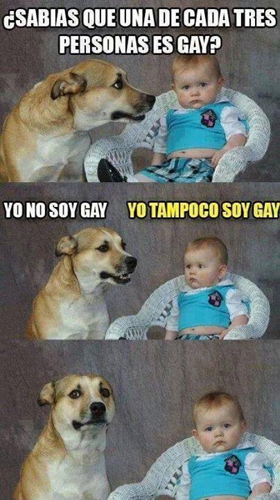 una-de-cada-3-personas-es-gay-bebe-y-perro
