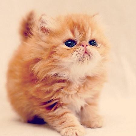 cats food4