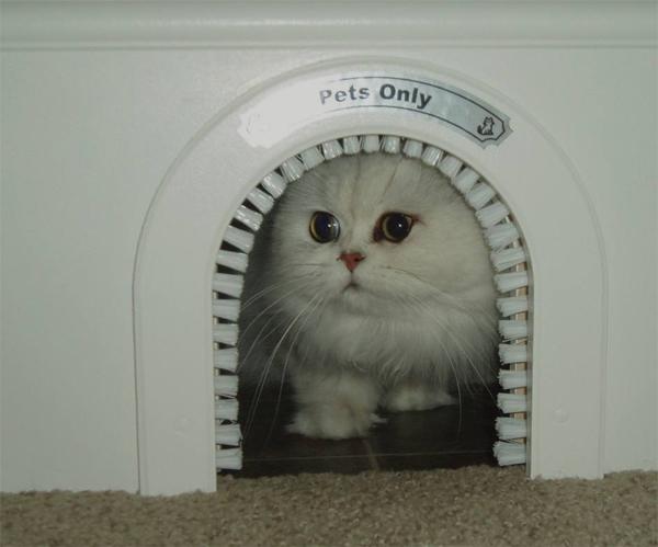 gatitos-entrada