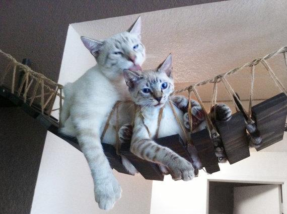 puente gato