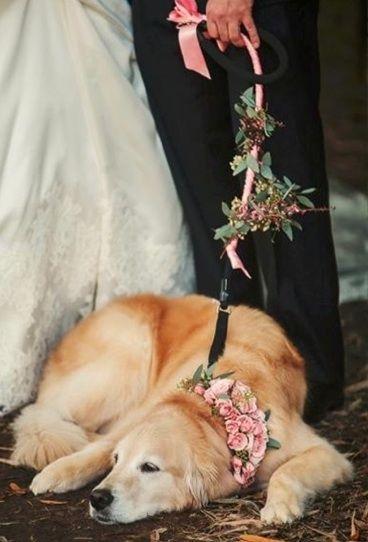 wedding dogs10