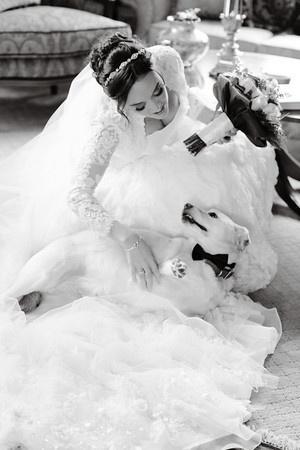 wedding dogs11