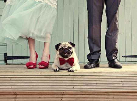 wedding dogs13
