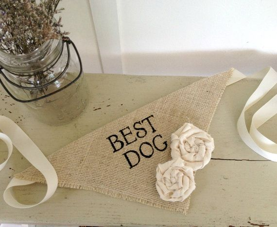 wedding dogs15