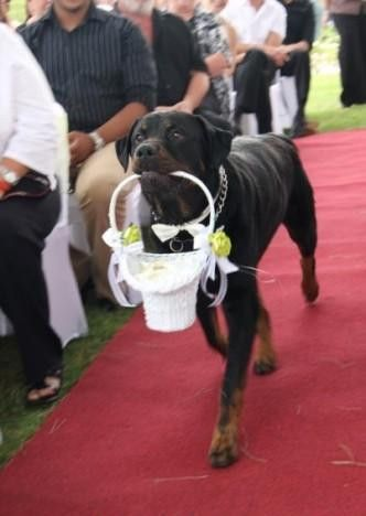 wedding dogs16