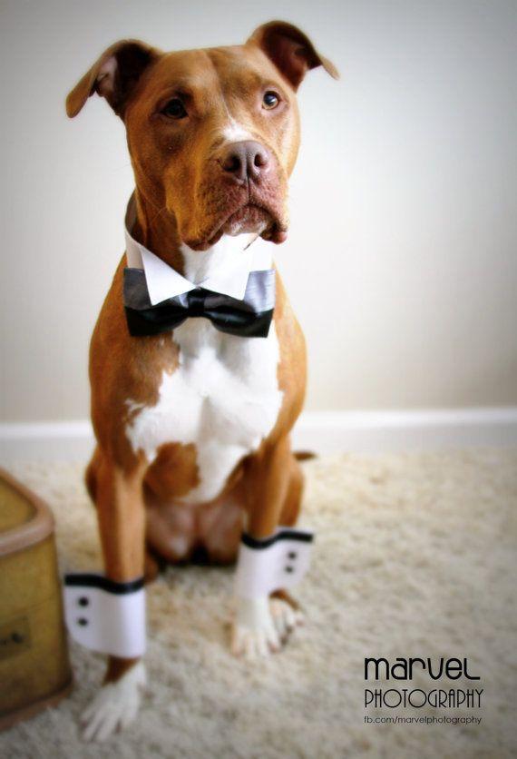 wedding dogs17