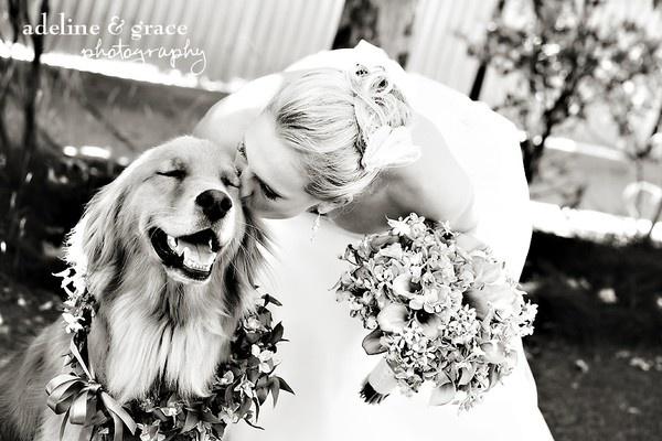 wedding dogs20