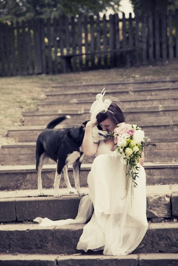 wedding dogs22
