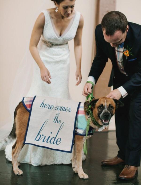 wedding dogs23