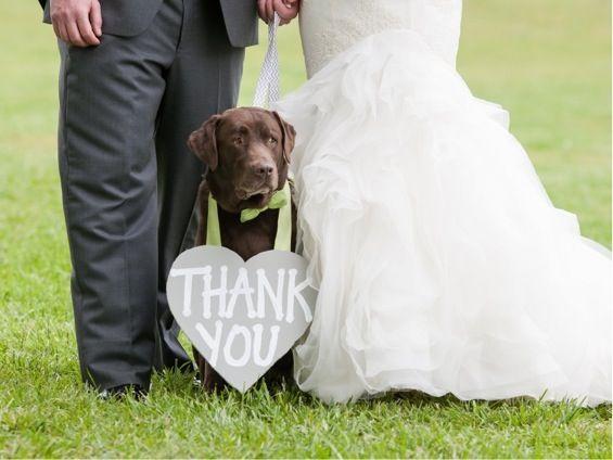 wedding dogs24