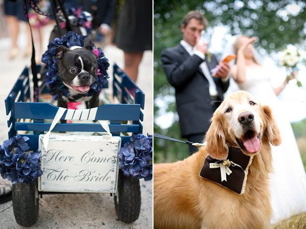 wedding dogs25