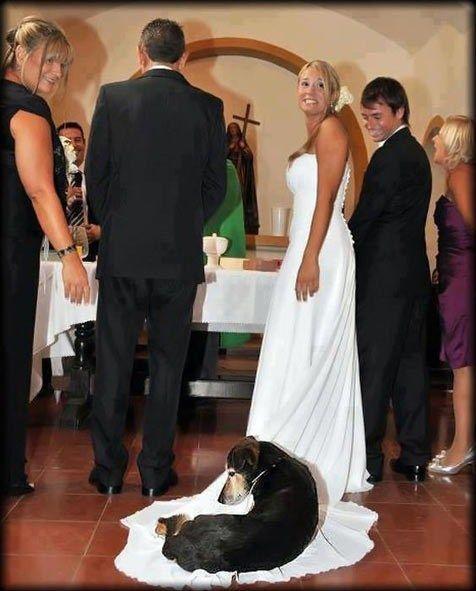 wedding dogs26