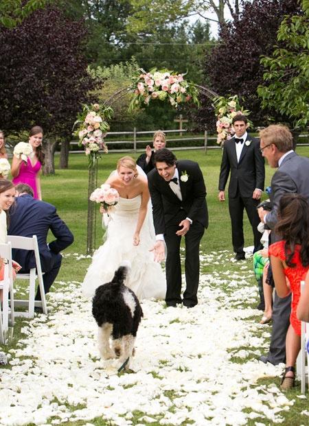 wedding dogs3