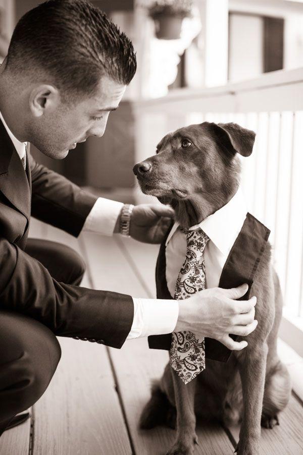 wedding dogs8