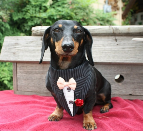 wedding dogs9