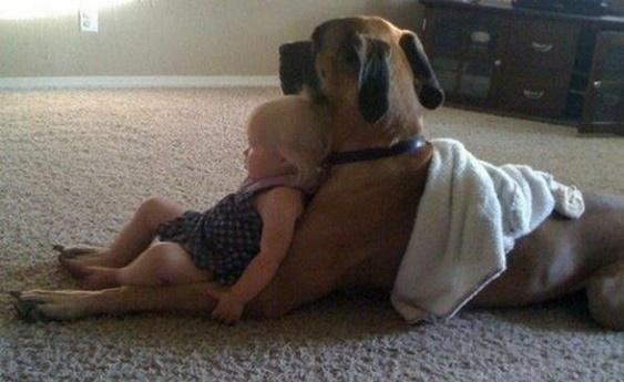 Dog babysitting25