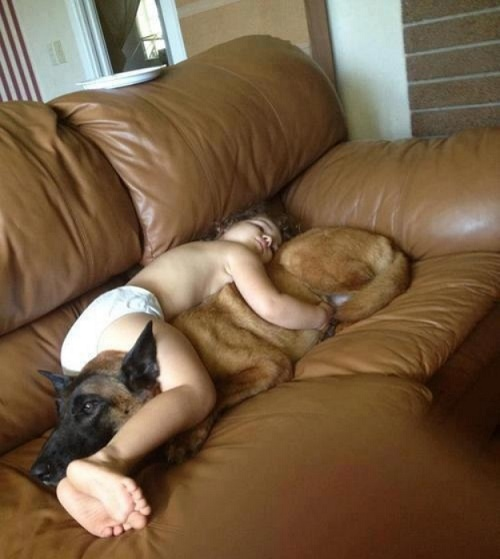 Dog babysitting26