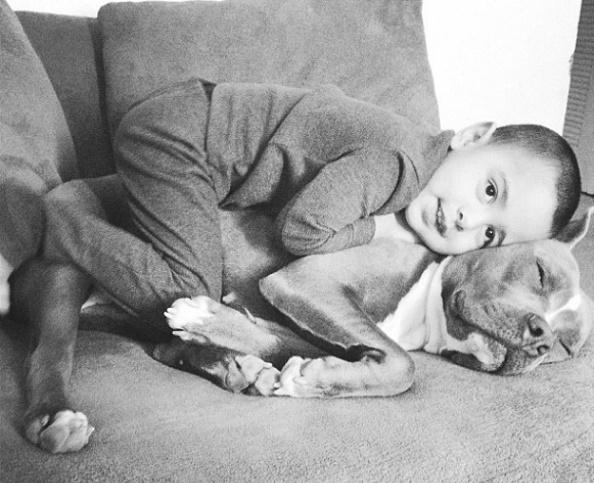 Dog babysitting27