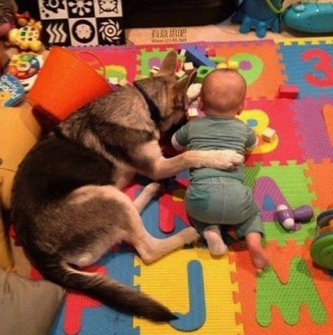 Dog babysitting28
