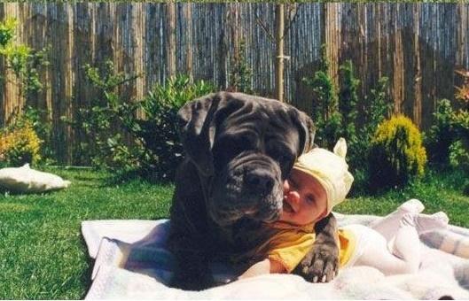Dog babysitting29