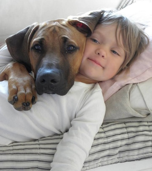 Dog babysitting3