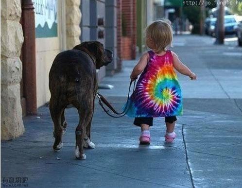 Dog babysitting30
