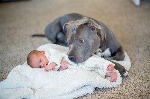 Dog babysitting32