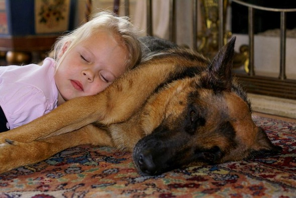 Dog babysitting33