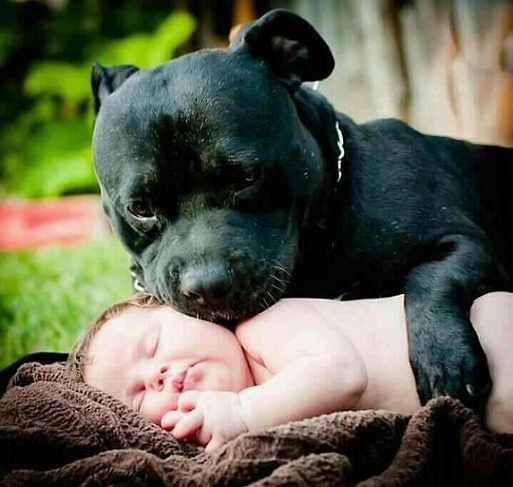 Dog babysitting34