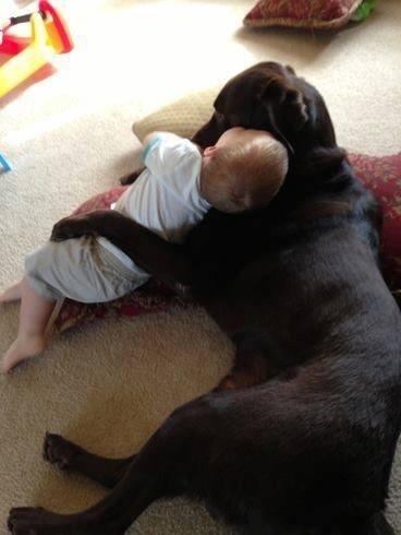 Dog babysitting35