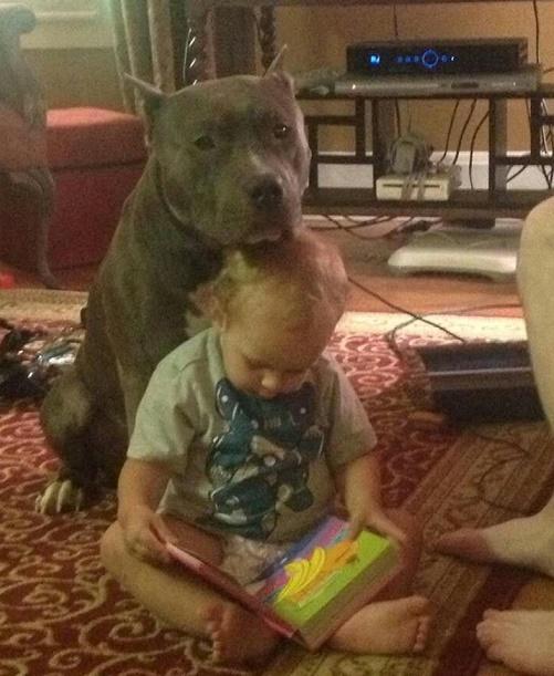 Dog babysitting36