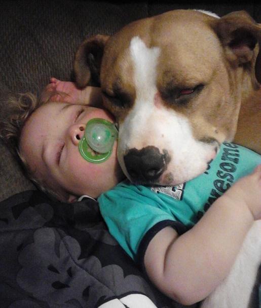 Dog babysitting39