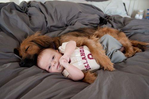 Dog babysitting40
