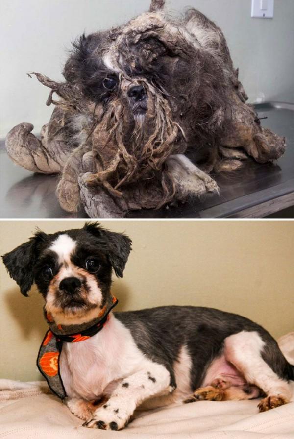 antes y despues rescatado