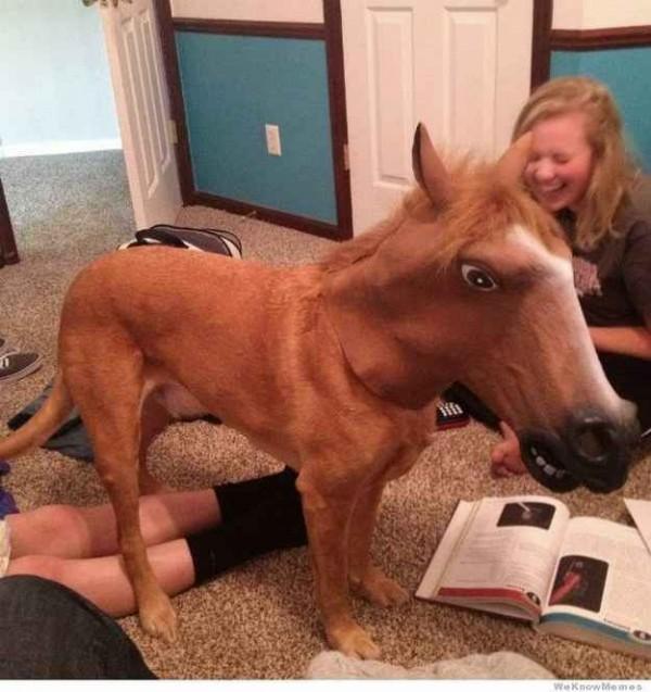 caballo perro