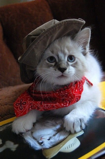 cats costumes10