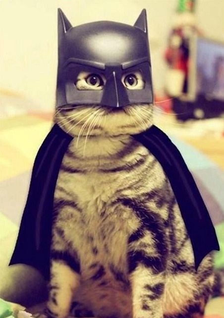 cats costumes11