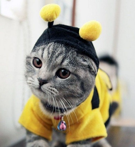 cats costumes12