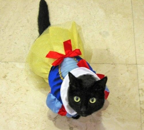 cats costumes13