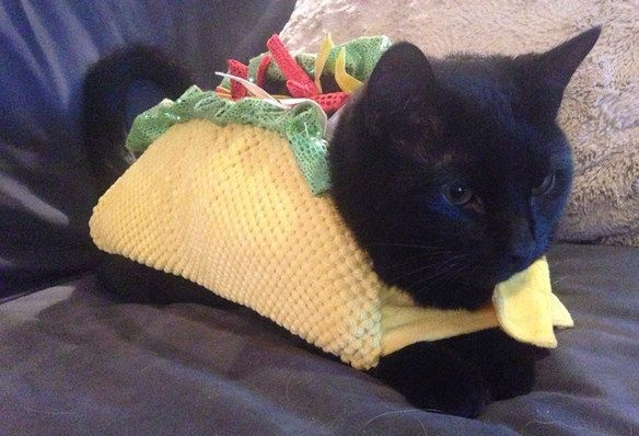 cats costumes16
