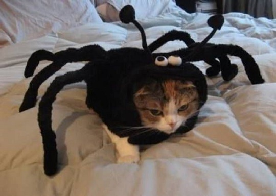 cats costumes17
