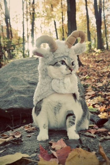 cats costumes19