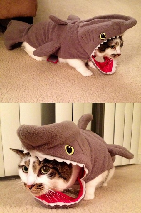 cats costumes2
