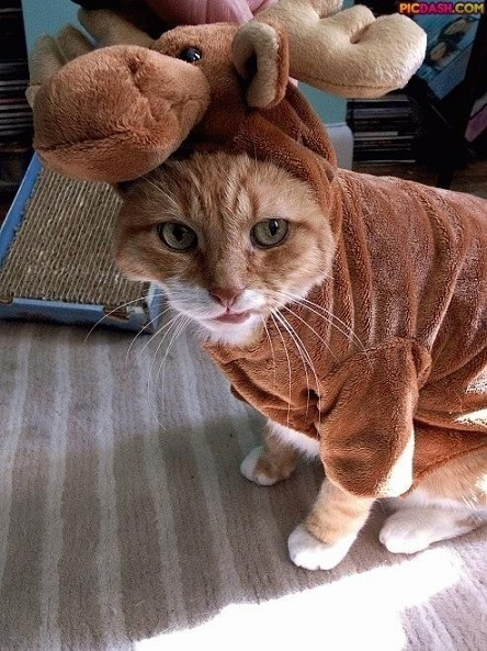 cats costumes20
