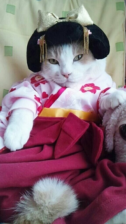 cats costumes21