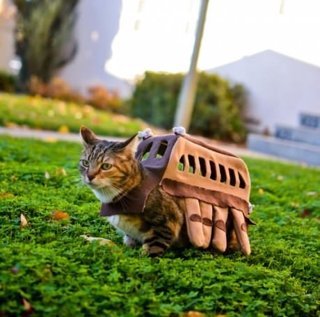cats costumes22