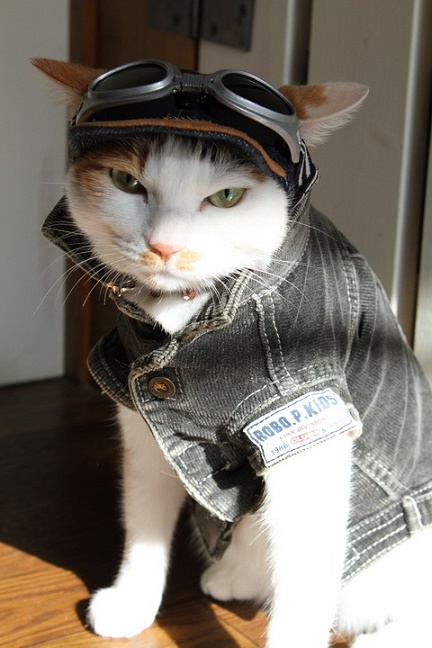 cats costumes24