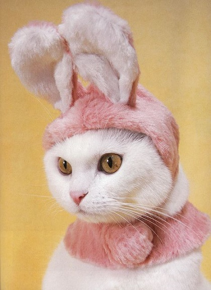 cats costumes25