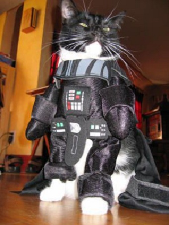 cats costumes26